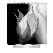 Delicate Rose Bud Black And White  Shower Curtain