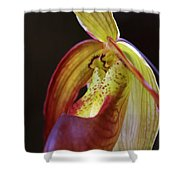 Delicate Slipper Shower Curtain