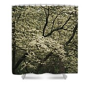 Delicate White Dogwood Blossoms Cover Shower Curtain