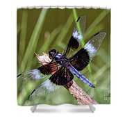 Delicate Wings Of A Dragonfly Shower Curtain