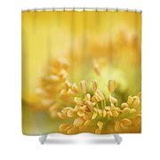 Delicate Yellow Poppy Shower Curtain