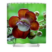 Delicately Veined ... With Tentacles Shower Curtain