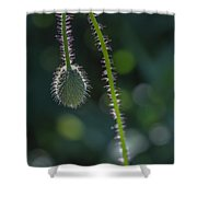 Delicately Waiting Shower Curtain
