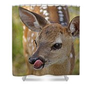 Delicious Deer Shower Curtain