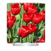 Delicious Tulips Shower Curtain