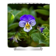 Delightful Colors Shower Curtain