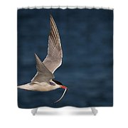 Delivery  4398 Shower Curtain