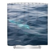 Delphin 1 The Mermaid Shower Curtain