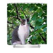 Demure Kitty Shower Curtain