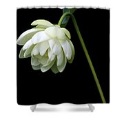 Demure Shower Curtain