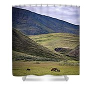 Denali Grizzly Family Shower Curtain