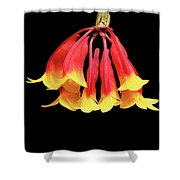 Dendrobium Lawesii Shower Curtain