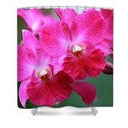 Dendrobium Orchid 1 Shower Curtain