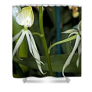 Dendrobium Orchid Shower Curtain