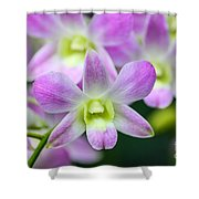 Dendrobium Orchids Shower Curtain