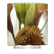 Denmark Close Up Brown Dahlia Shower Curtain