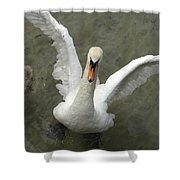 Denmark, Copenhagen Swan Flaps Her Wing Shower Curtain