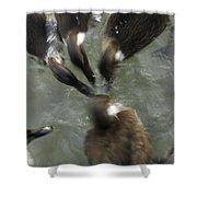 Denmark Group Of Ducks Ducking Shower Curtain