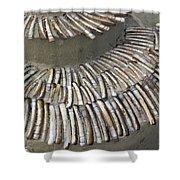 Denmark, Romo, Seashells, Razor Clams Shower Curtain