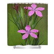 Deptford Pink Shower Curtain