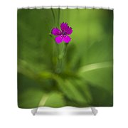 Deptford Pink Dianthus Flower Shower Curtain