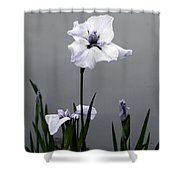 Desaturated Japanese Water Iris 2707 H_5 Shower Curtain