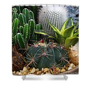 Desert Art Shower Curtain