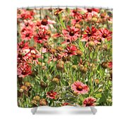 Desert Beauties Shower Curtain