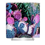 Desert Blush Shower Curtain