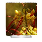 Desert Breeze Shower Curtain