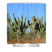 Desert Cacti In Cabo Pulmo Mexico Shower Curtain