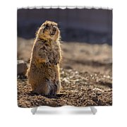 Desert Dawg Shower Curtain