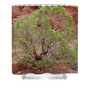 Desert Elements 6 Shower Curtain