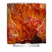 Desert Fire Shower Curtain