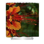 Desert Flower Shower Curtain