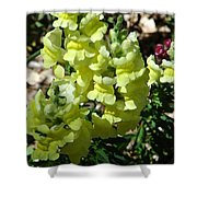Desert Flowers Virginia City Nevada Shower Curtain