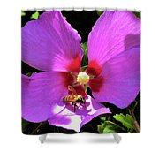 Desert Hibiscus With Honey Bee Shower Curtain