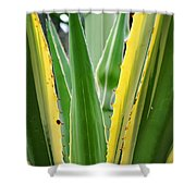 Desert House Aloe Succulent Shower Curtain