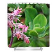Desert House Blooming Succulent Shower Curtain