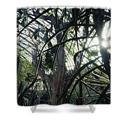 Desert House Sunset Shower Curtain