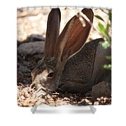 Desert Jackrabbit Shower Curtain