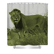 Desert Lions Shower Curtain