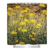 Desert Marigold Bouquet  Shower Curtain