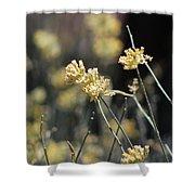 Desert Milkweed Shower Curtain