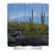Desert Mule Shower Curtain