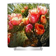 Desert Perfection Shower Curtain
