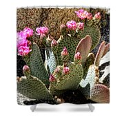 Desert Plants - Fuchsia Cactus Flowers Shower Curtain