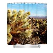 Desert Plants - Porcupine Cholla Shower Curtain