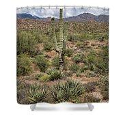 Desert Renewel Shower Curtain