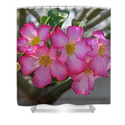 Desert Rose Or Chuanchom Dthb2105 Shower Curtain